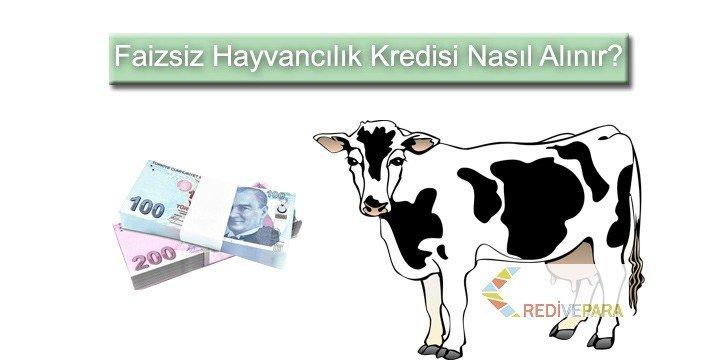 Faizsiz Hayvancılık Kredisi Nasıl Alınır?