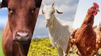 Geri Ödemesiz Hayvancılık Kredisi Nasıl Alınır?