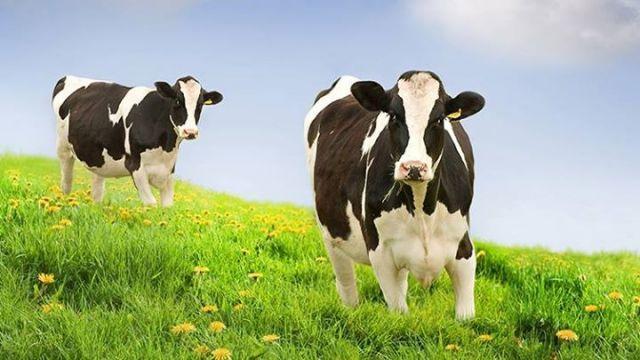 KOSGEB Hayvancılık Desteği Nasıl Alınır?